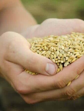 woman holding grains