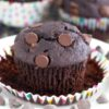 chocolate muffins topped with chocolate chips
