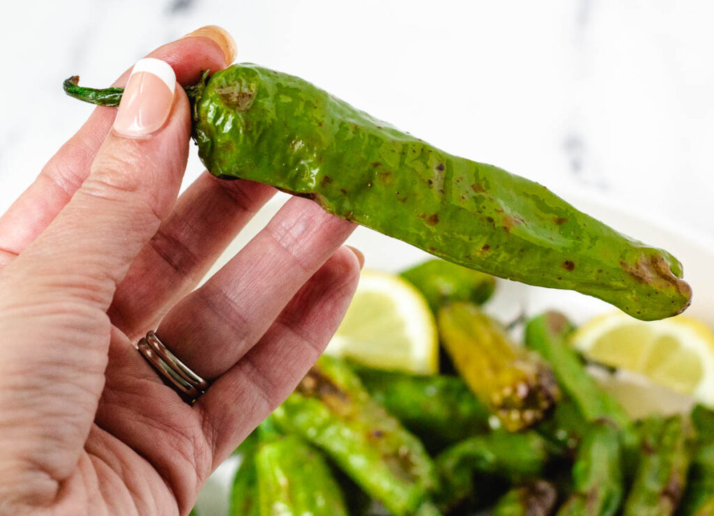Hand holding cooked shishito pepper